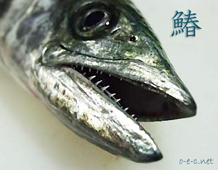 春の魚、鰆(さわら)