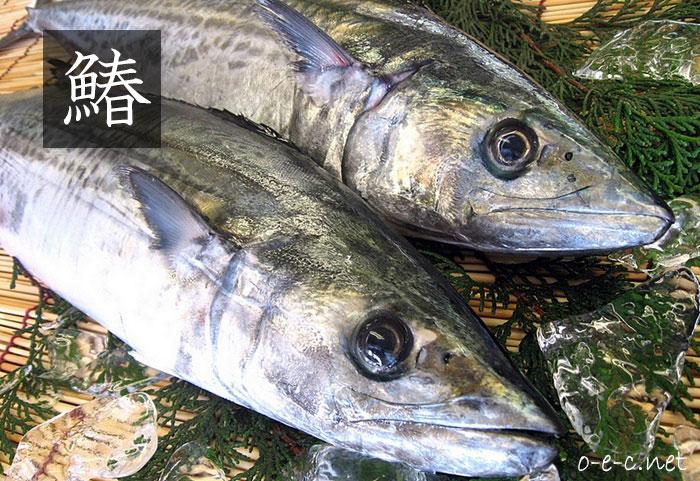 上品な味の高級魚「鰆(さわら)」