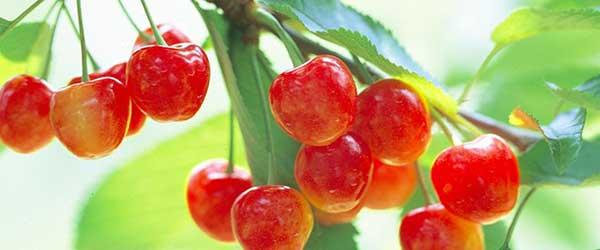 桜桃 – さくらんぼ – cherry | ...